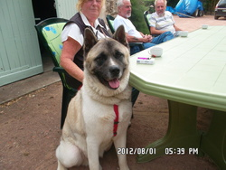Sammy, chien Akita américain
