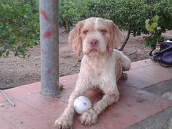 Samy, chien