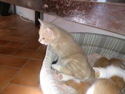 Samy, chat Gouttière