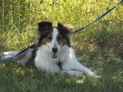 Sandalle, chien