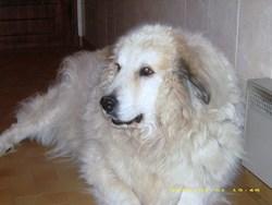 Sandra, chien