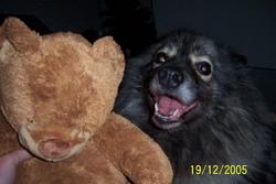 Sandra Tu Nous Manque, chien Spitz allemand