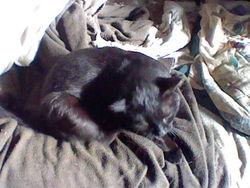 Sangohan, chat Gouttière