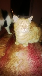 Sanka, chat Gouttière