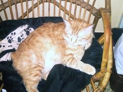 Santino Ou Mignon, chat