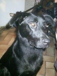 Saphyra, chien