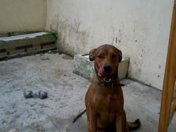 Sara, chien