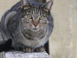 Sarko, chat Gouttière