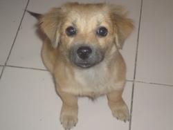 Sasha, chien