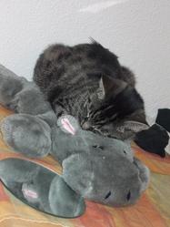 Saskya, chat