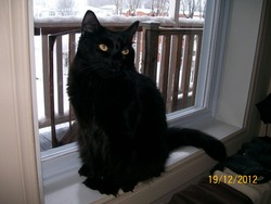 Sasquatch, chat Gouttière