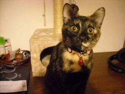 Sassy, chat Gouttière