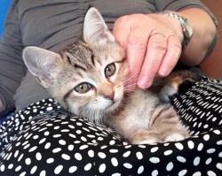Scarlett, chat Gouttière