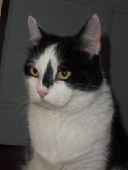 Schumi, chat Européen
