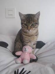 Schweppes, chat Gouttière