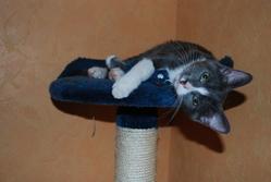 Schwepps, chat Gouttière