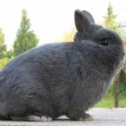 Scooby, rongeur Lapin