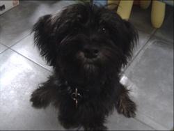 Scott, chien