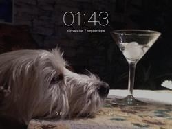 Scotti, chien West Highland White Terrier