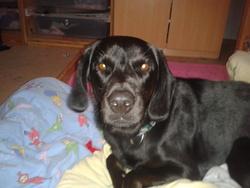 Scoubidoo, chien