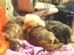 Scrachy Et Gazelle, chien