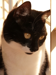 Scrat Rip, chat Gouttière