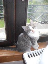 Scrat, chat Gouttière