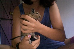 Scrat, rongeur Octodon