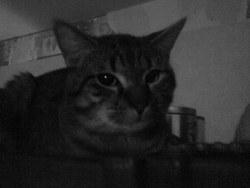 Scratch, chat Gouttière