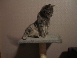 Secrete, chat Gouttière