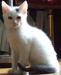 Seiyar, chat Gouttière