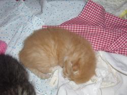 Selka, chat Gouttière