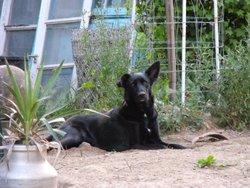 Selva, chien