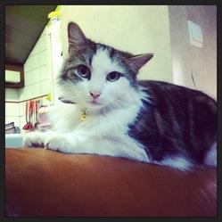Sethie, chat Gouttière