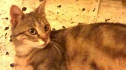 Sganarelle, chat Gouttière