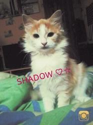 Shadow, chat Gouttière