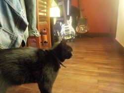 Shadow, chat