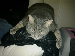 Shadow, chat Gouttière