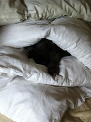 Shaggy, chat Gouttière