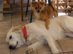 Shaka, chien