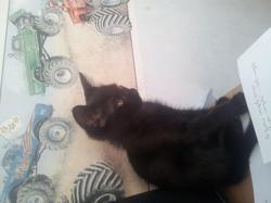 Shakti, chat Gouttière