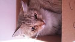 Shana, chat Gouttière