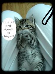 Shanna, chat Gouttière