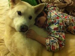 Shebba, chien Malamute de l'Alaska