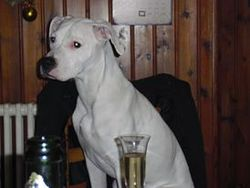 Sheena, chien Dogue argentin