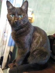 Sheitan, chat Gouttière