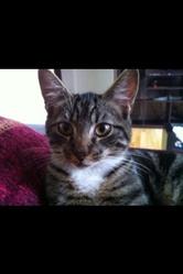 Zili Junior, chat Européen