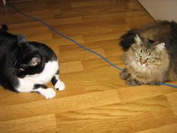 Shelsye Et Fébye, chat Gouttière