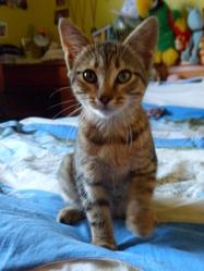 Sherkan, chat Gouttière