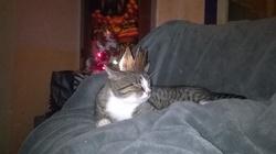 Shiffu, chat Gouttière